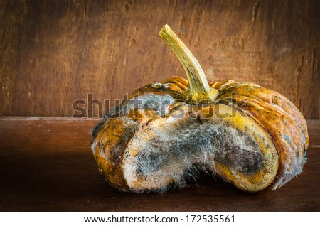 Infected pumpkin by fungi on table in the kitchen,still life - stock photo