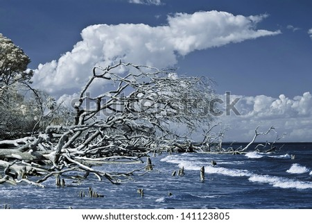 infrared photo of trees falling into ocean - stock photo