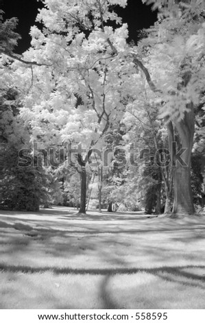 infrared view of trees in park - stock photo