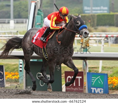 INGLEWOOD, CA - DEC 5: Two-year-old colt, Free Pourin, wins his first race under jockey Joe Talamo at Hollywood Park on Dec 5, 2010 in Inglewood, CA. - stock photo
