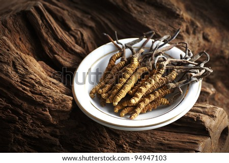 Ingredient used in Traditional Chinese Medicine isolated on white background - Cordyceps sinensis (caterpillar fungus) - stock photo