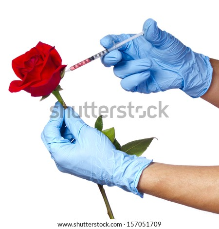 Injection into red rose isolated on white background. Genetically modified flower and syringe in his hands with blue gloves. Concept - stock photo
