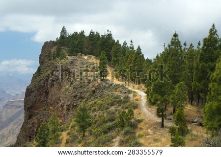 Inland Central Gran Canaria, Artenara area, Canarian Pine trees growing on the slopes