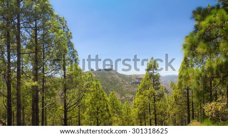 Inland Gran Canaria, Roque Nublo and Canarian Pine trees