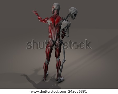 Inner skeleton and musculature man divide - stock photo