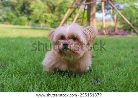 innocent dog playing in the garden - stock photo