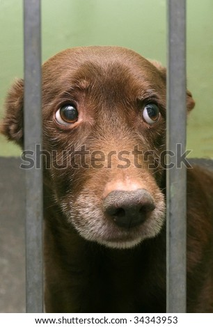 innocent puppy it was locked up in the cage. - stock photo
