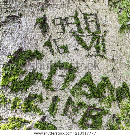 Inscriptions carved on the bark of a tree. Covered with moss