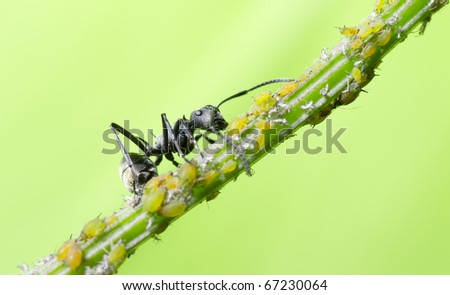 insect ant macro - stock photo