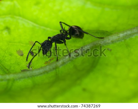insect ant on green leaf - stock photo