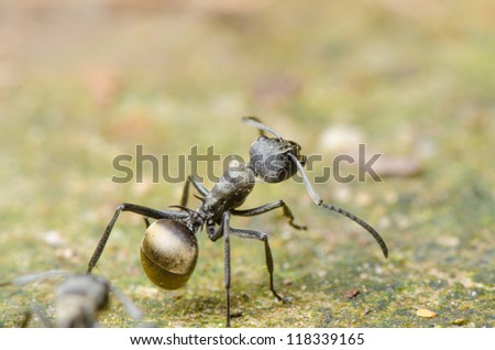 insect ant on ground macro - stock photo