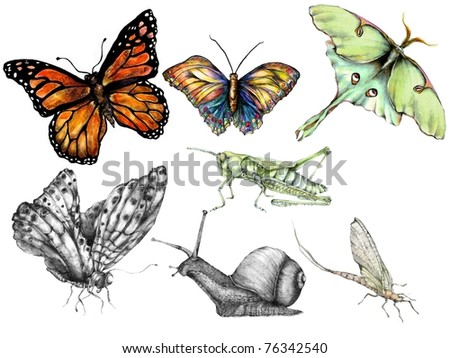 Insect Clip Art - stock photo