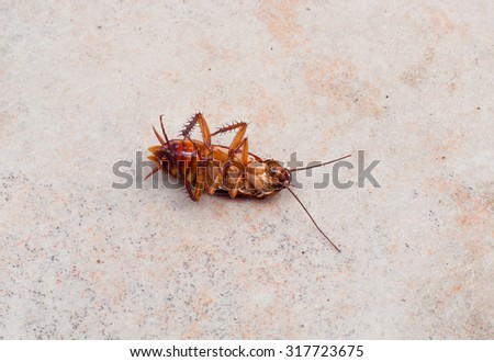 insect dead cockroach bug on the floor - stock photo