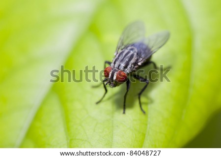insect fly macro on leaf - stock photo