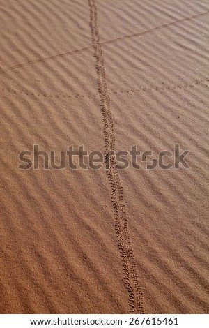 insect footprints in the sand, Sahara, Morocco - stock photo