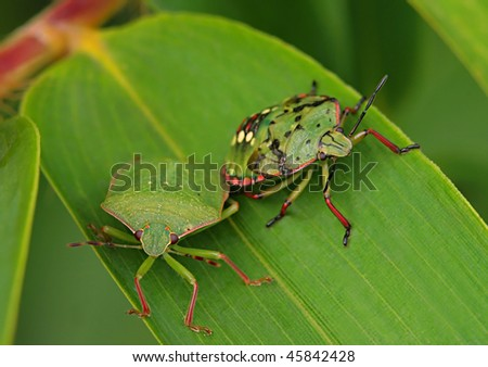 Insect Friendship - stock photo