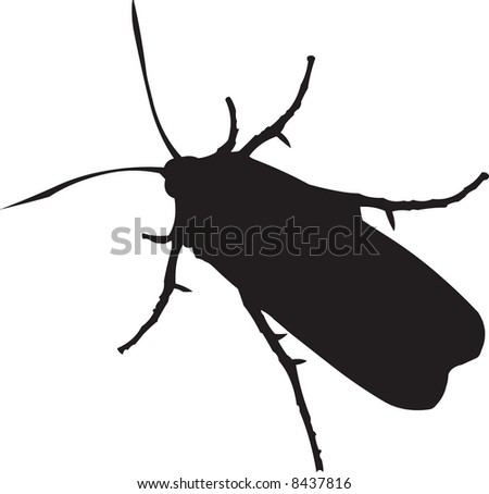 Insect illustration - stock photo