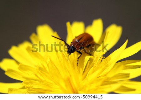 Insect in flower