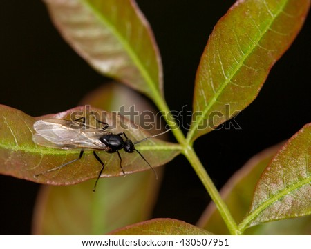 Insect in macro