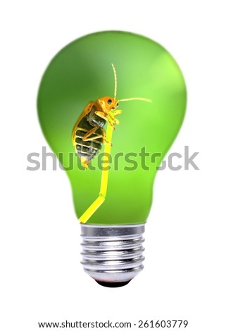 insect inside the light bulb - stock photo