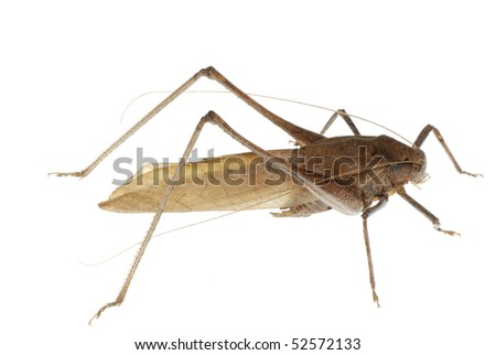 insect katydid - stock photo