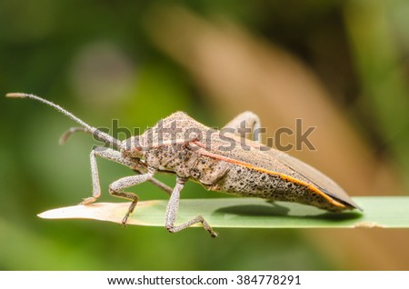 insect, Life of Insects - stock photo