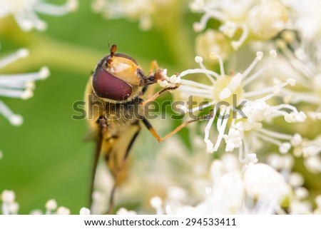 Insect on a leaf - stock photo