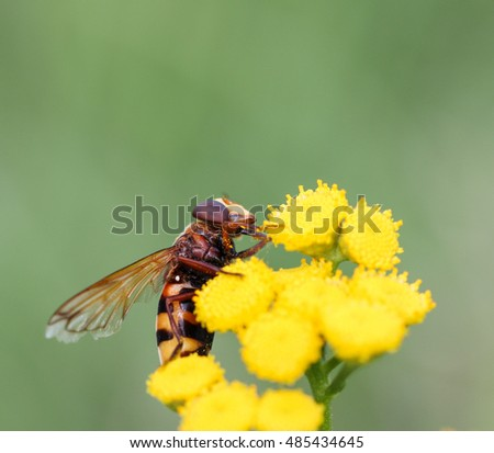 insect on a yellow flower