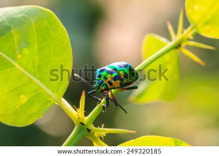Insect on leaf, beautiful wildlife in nature