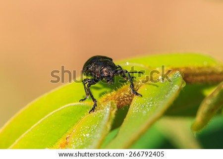 Insect on leaf, beautiful wildlife in nature - stock photo
