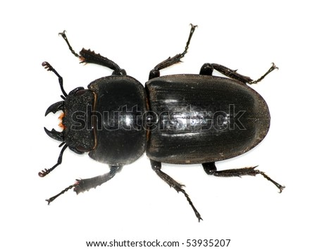 insect stag beetle bug isolated in white - stock photo
