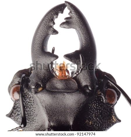 insect stag beetle isolated on white - stock photo