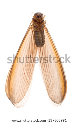 insect termite white ant bug - stock photo