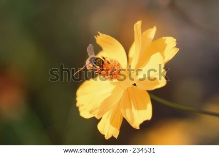 Insect World  - stock photo