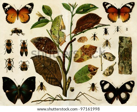 insects  - an illustration of the encyclopedia publishers Education, St. Petersburg, Russian Empire, 1896 - stock photo