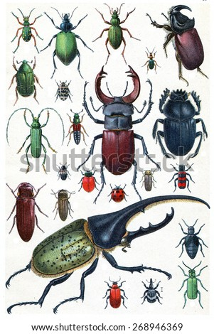 Insects, beetles and scarab, vintage engraved illustration. La Vie dans la nature, 1890.  - stock photo