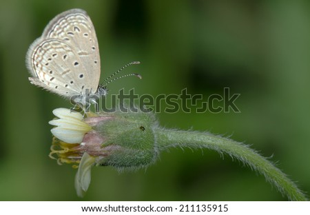 Insects, butterflies and flowers