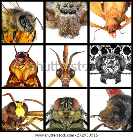 Insects.Close up. - stock photo