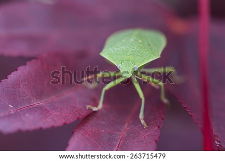 insects coupling - stock photo