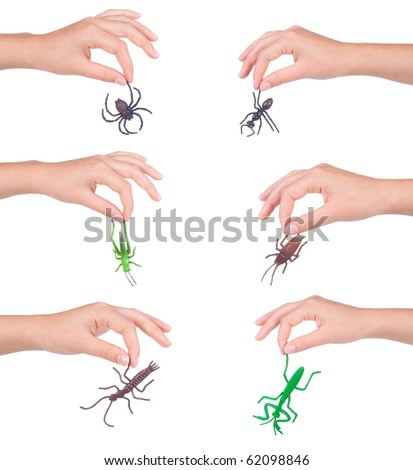 insects in a female hand, isolated - stock photo