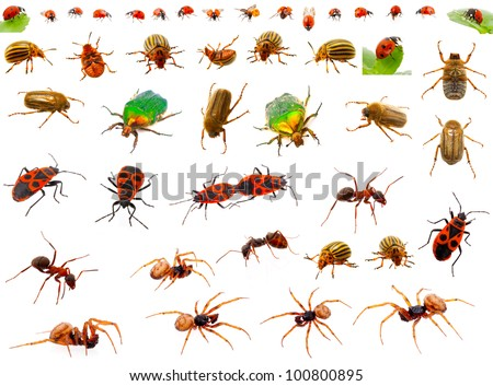 Insects : ladybug, may-bug, cockchafer, ant, spider, firebug and colorado potato beetle. isolated on white