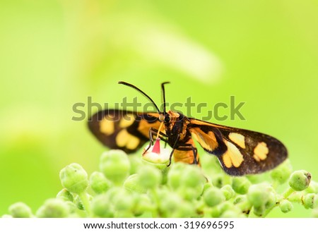Insects macro focus - stock photo