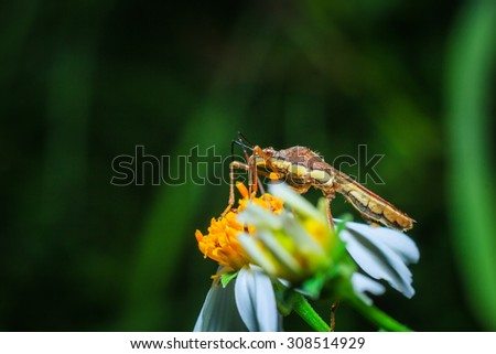 Insects -Macro  Insects- focus in the eye. - stock photo
