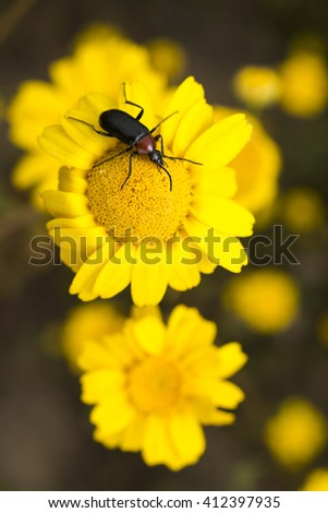 insects on flowers in spring