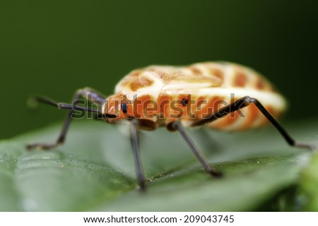 Insects on the other hand, naturally green. - stock photo