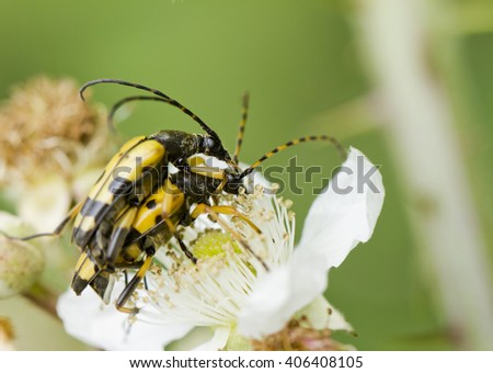 Insects pairing; insects having sex - stock photo