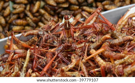 insects snacks