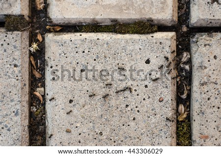 Insects topic: ants creep on a pavement slab in the garden - stock photo
