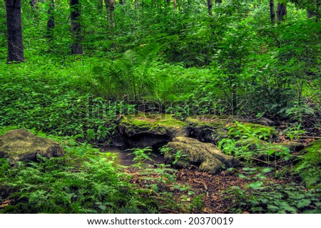 Inside a deciduous forest. HDR image created by combining three different exposures. - stock photo