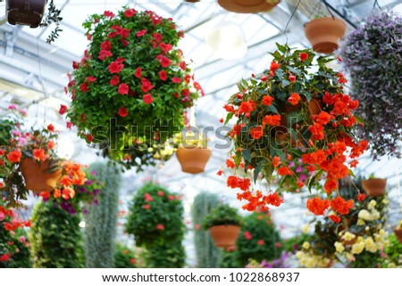 https://thumb7.shutterstock.com/display_pic_with_logo/167494286/1022868937/stock-photo-inside-garden-in-shizuoka-1022868937.jpg